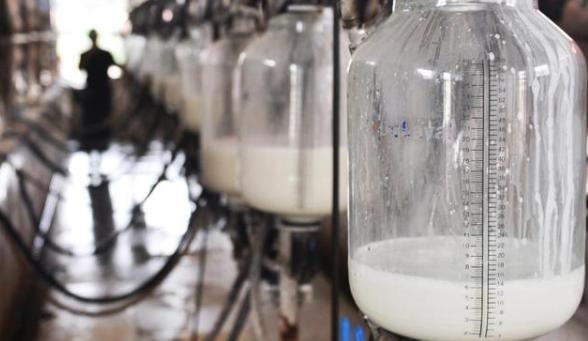 光明万博体育app苹果版官网:将在宁夏建高端奶业基地